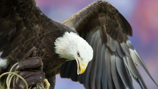 Soar with this eagle quiz