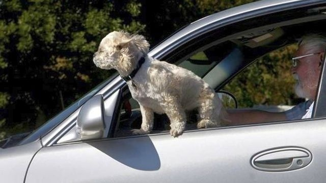 NJ voters OK with requiring seat belts for pets