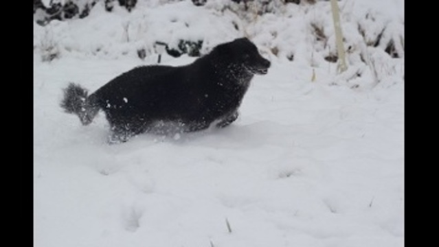 Jazzy in the snow_23413376