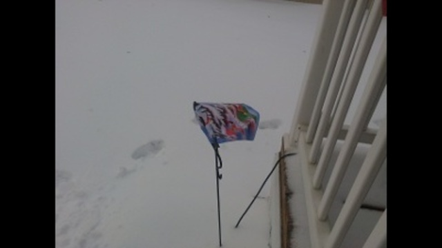 Look at what the ice did to my garden flag!!_23496150