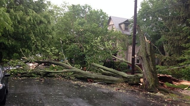 Severe storm brings down trees, power lines around region