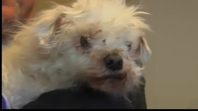 Abandoned dog recovering well after surgery