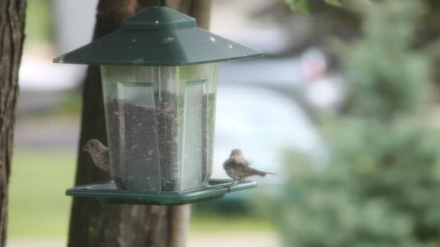 Bethlehem Twp. shoots down old bird feeder law