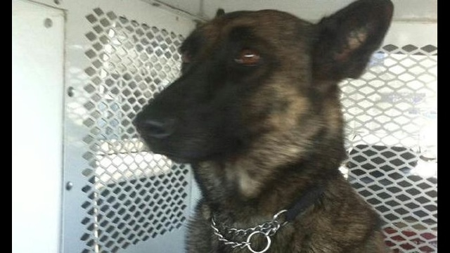 Police breathe sigh of relief after missing K-9 is found