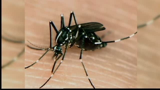 Zika cases confirmed in Prentiss County travelers