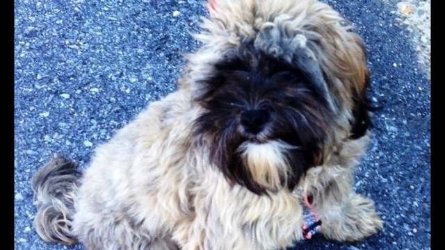 Palmer Twp. police rescue pooch in peril