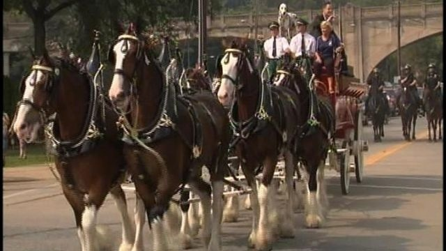 Clydesdales to parade in Allentown, Easton