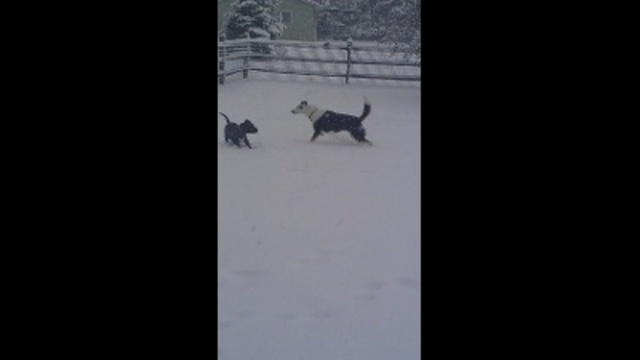 Jazz and Jake playing in the snow!!!_24259916