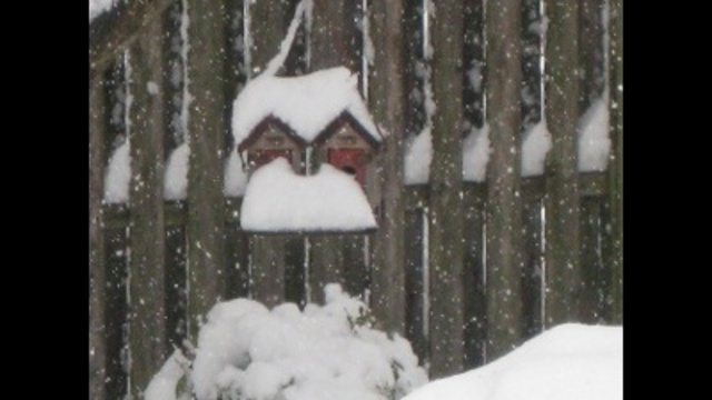 Snowy Bird House_24269596