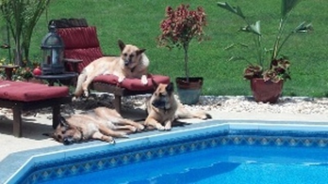 basking by the pool_27744884