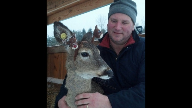 Fawn and dad_24471470
