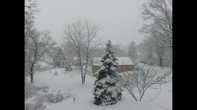 Snow pic from Temple, Pa_24261086