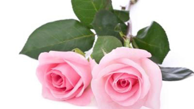 What do Valentine flowers really mean?