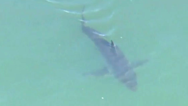 Shark advisory issued after 15 Great Whites spotted near California beach