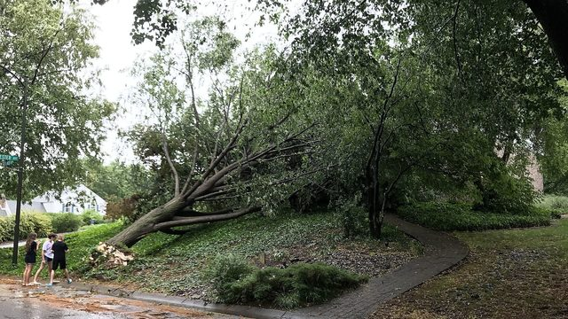 Strong storm topples large trees in Berks