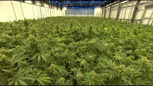 Jefferson County medical marijuana company is first in Pennsylvania to begin growing